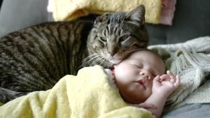 catbaby 300x169.jpg?resize=300,169 - Senior Cat Has Ultimate Bond with Adorable Baby Sister