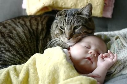 catbaby 412x275.jpg?resize=412,275 - Senior Cat Shares Very Strong Bond With Adorable Baby Girl