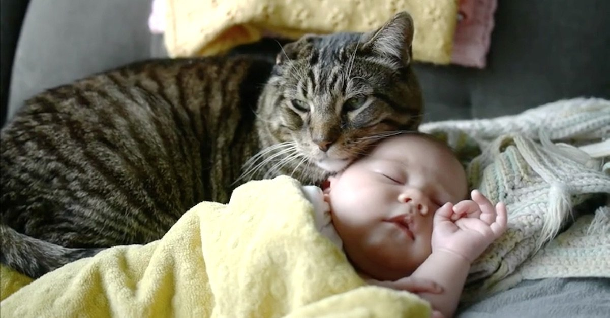 catbaby.jpg?resize=1200,630 - Senior Cat Has Ultimate Bond with Adorable Baby Sister