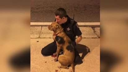 cop comforts pit bulls 412x232.jpg?resize=412,232 - Police Officers Rescued Two Frightened Dogs They Found In The Middle Of The Road
