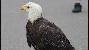 eagle-road-block