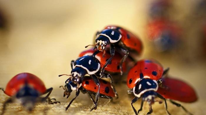 ladybugs live b1b1fafb15fc120c - He opened his dog's mouth and what he saw inside...? SHOCKING!