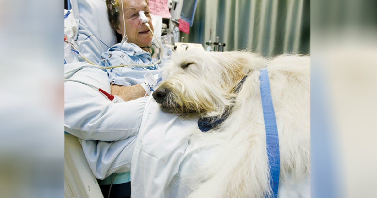 pet visit to hospital.jpg?resize=1200,630 - Giving The Will To Live: Innovative Pet Visitation Program At Hospital Saves Lives