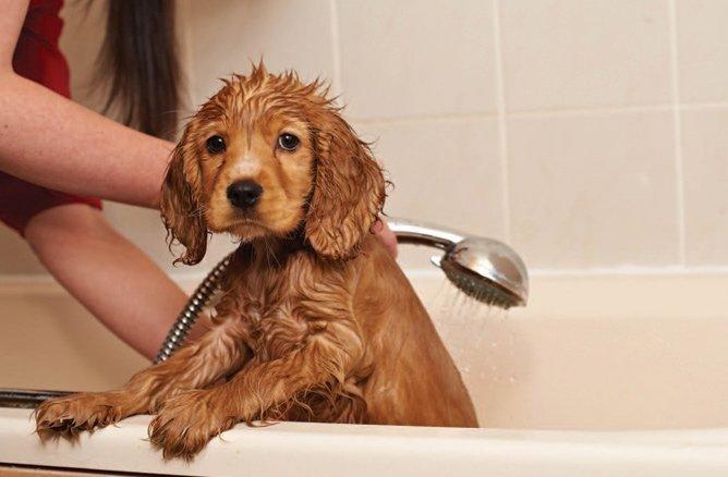 puppy_in_bath