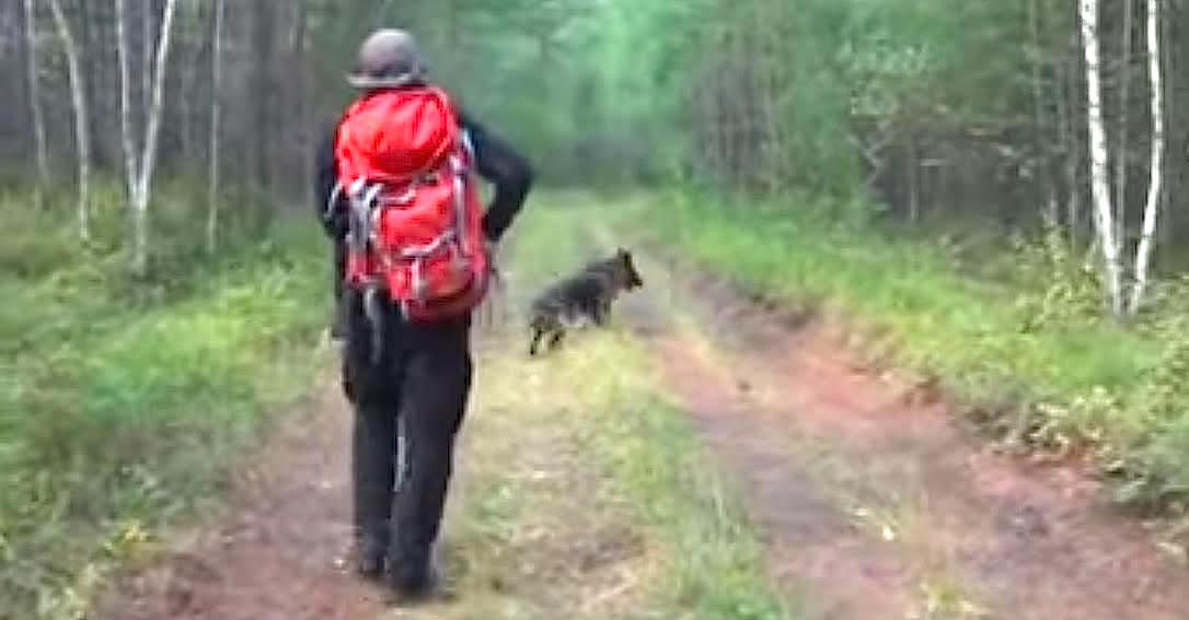unnamed8.jpg?resize=1200,630 - Girl Missing For 11 Days Found In The Woods After Rescuers Followed Hero Dog