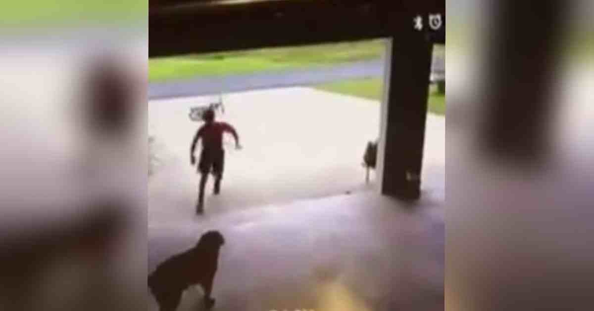 boy sneaks into garage.jpg?resize=1200,630 - Woman Caught A Little Boy Sneaking Into Her Garage, He Then Gave Her Dog A Hug