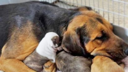 dogmom 412x232.jpg?resize=412,232 - New Mom is Given a New Chance at Life and Returns the Favor by Adopting 5 Pit Bulls