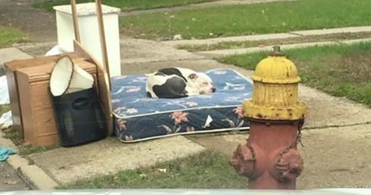 final boo pit bull min.jpg?resize=1200,630 - Dog Patiently Waited For Family To Return After They Heartlessly Left Him On A Mattress