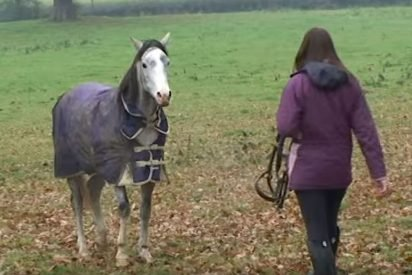 horse 412x275.jpg?resize=412,275 - Loving Horse Reunited With Owner After Being Separated For Three Long Weeks