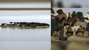 netherlands-horse-rescue-team