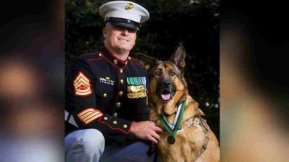 semper fido 412x232.jpg?resize=412,232 - One Heroic Dog Never Let A Single Soldier Get Injured On Her Watch