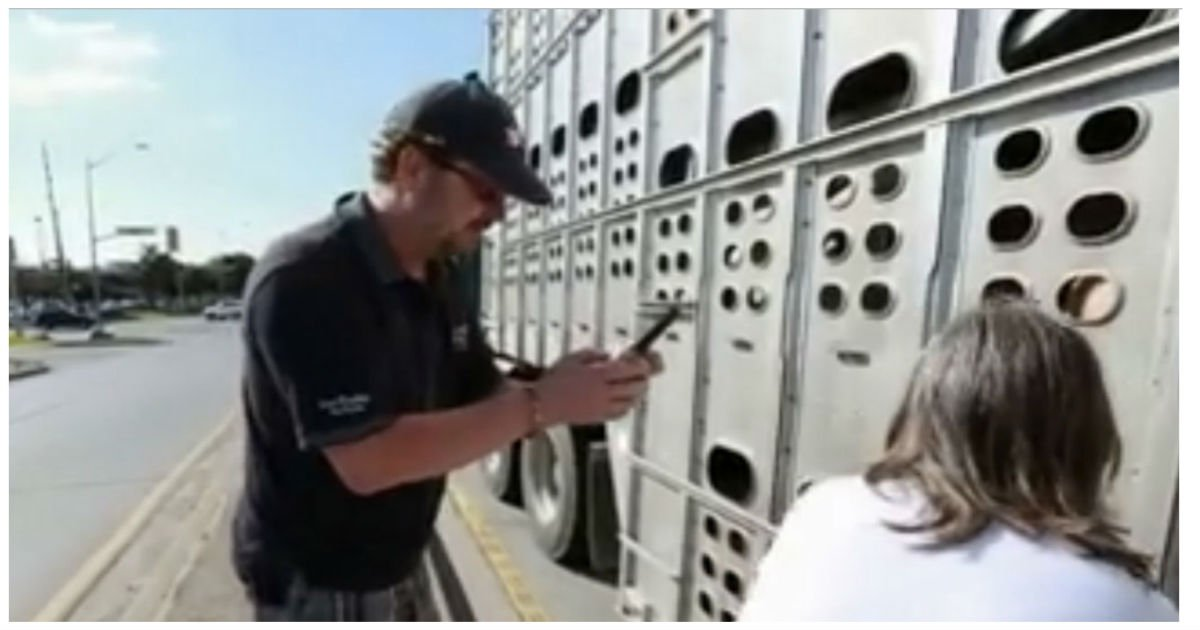 toronto pig save trial 3.jpg?resize=1200,630 - Woman Gives Water To Dehydrated Pigs On The Road.. Now, She Faces 10 Years Of Jail Time