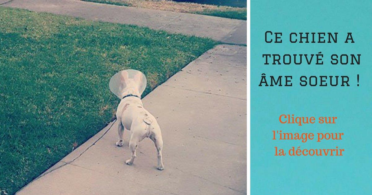 fake ouvraie photo 7.png?resize=1200,630 - Mais pour qui ce chien a-t-il eu un coup de foudre ?