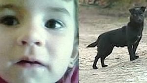 herodog 300x169.jpg?resize=300,169 - Hero dog SAVES missing 3 years old little girl!