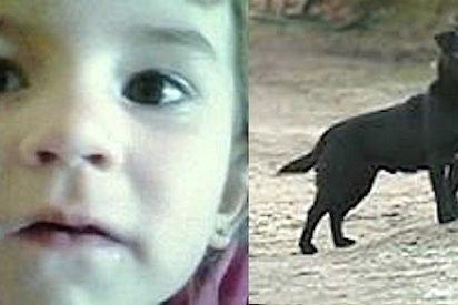 herodog 412x275.jpg?resize=412,275 - 3-Year-Old Girl Went Missing On Freezing Night, A Stray Dog Kept Her Safe And Warm
