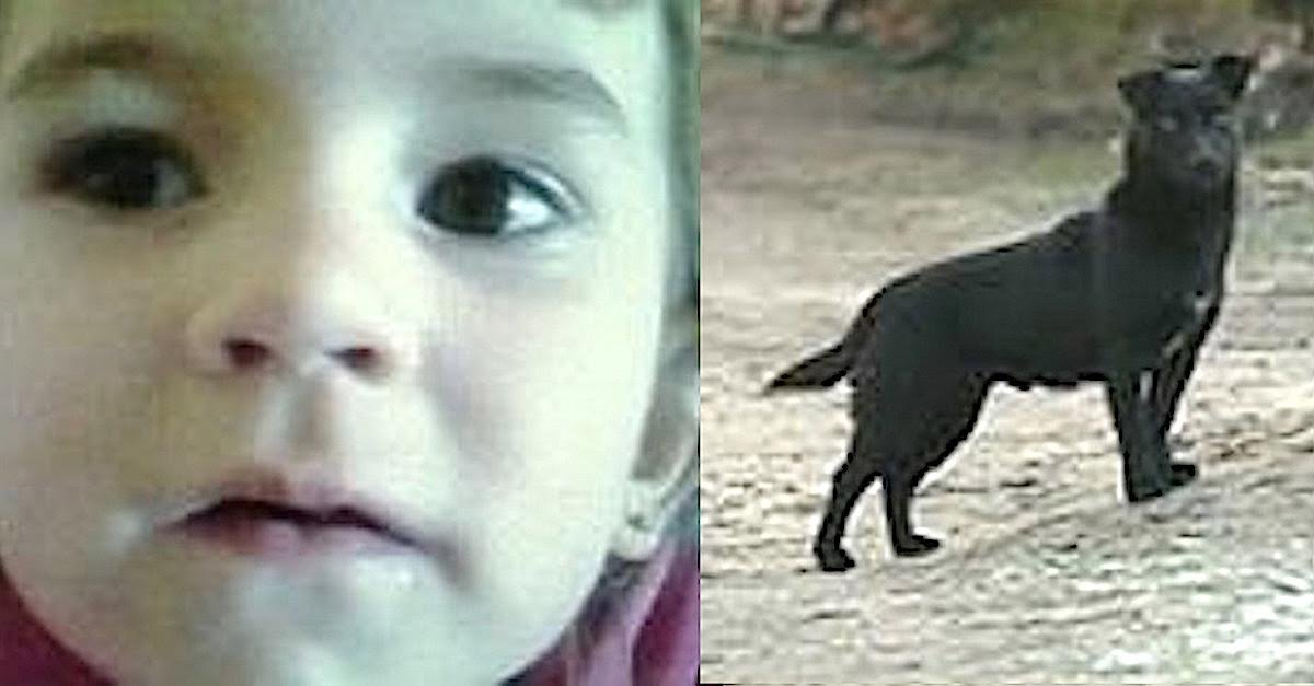 herodog.jpg?resize=1200,630 - 3-Year-Old Girl Went Missing On Freezing Night, A Stray Dog Kept Her Safe And Warm