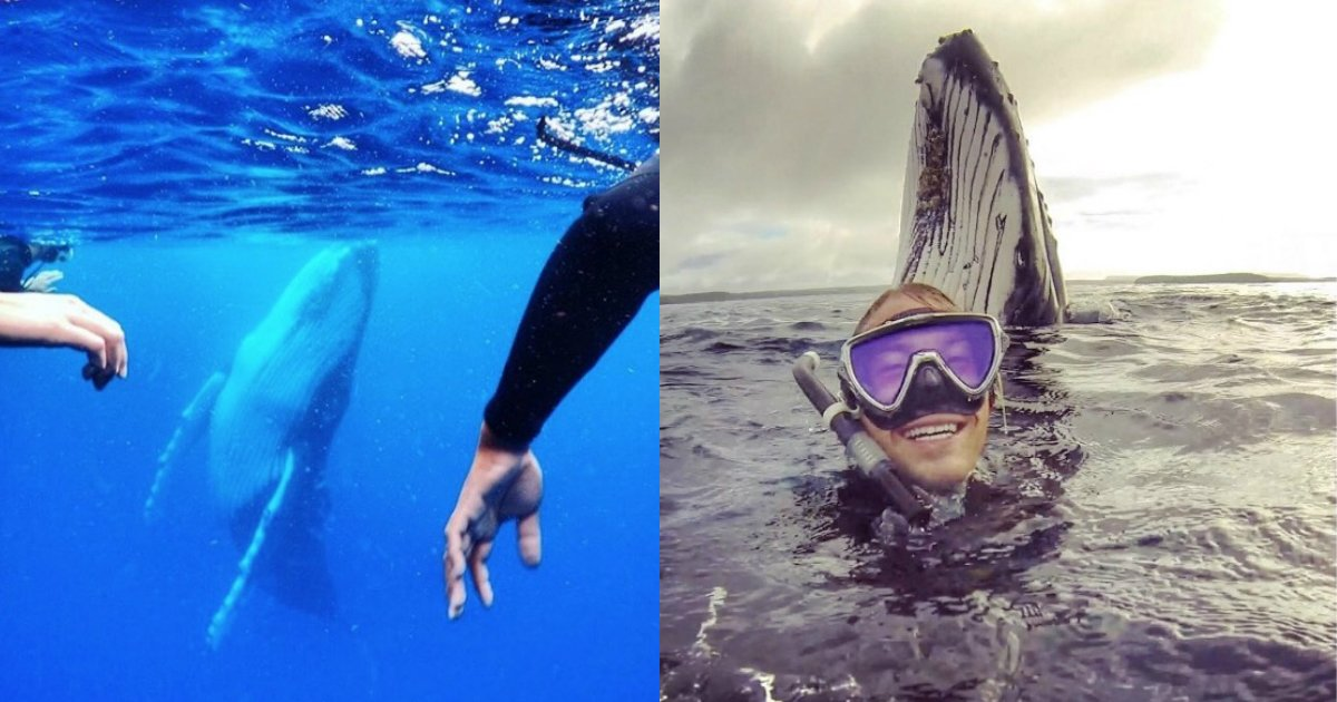 humpback whale photo.jpg?resize=1200,630 - Tourist Took A Photo With Humpback Whale In The Ocean