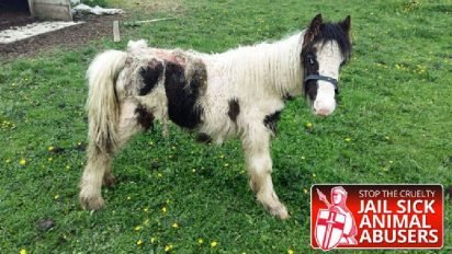 pony 5 412x232.jpg?resize=412,232 - Abandoned Pony Rescued And Treated After His Skin Got Overrun By Maggots