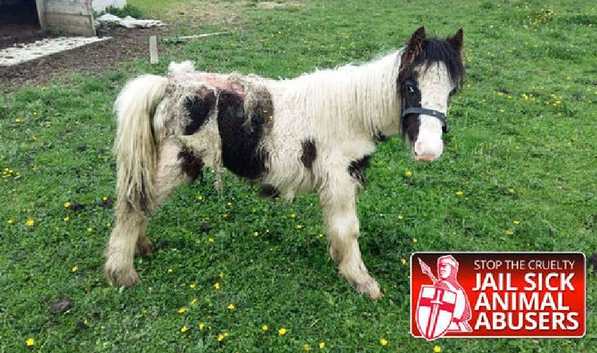 pony 5.jpg?resize=1200,630 - An Abandoned Pony Was Being Eaten Alive, When THIS Happened...