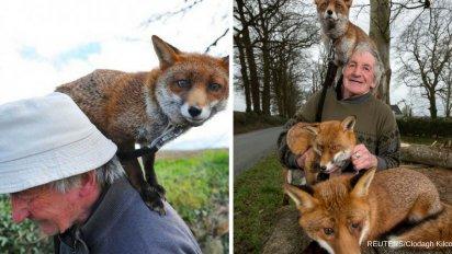 reuters clodagh kilcoyne 412x232.png?resize=412,232 - Il sauve 3 renards qui sont devenus ses meilleurs amis