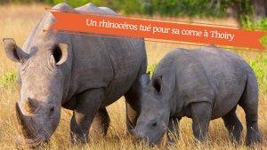 un rhinoceros tue pour sa corne en france 300x169.png?resize=300,169 - Un rhinocéros blanc abattu pour sa corne au zoo de Thoiry dans les Yvelines.
