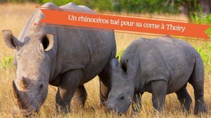 un rhinoceros tue pour sa corne en france 412x232.png?resize=412,232 - Un rhinocéros blanc abattu pour sa corne au zoo de Thoiry dans les Yvelines.