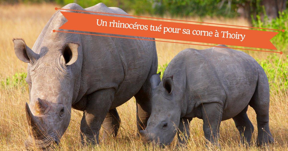 un rhinoceros tue pour sa corne en france.png?resize=1200,630 - Un rhinocéros blanc abattu pour sa corne au zoo de Thoiry dans les Yvelines.