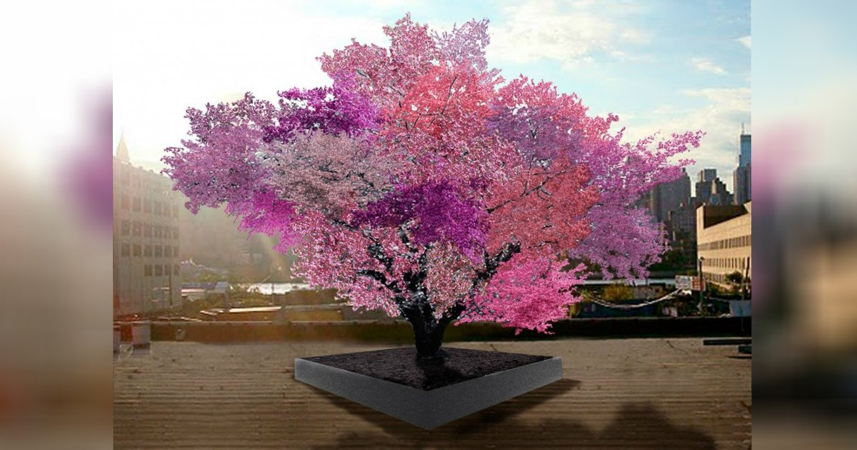 various fruit tree.jpg?resize=1200,630 - A Man Planted A Seed And Picks Various Kind Of Fruits From Just One Tree