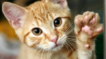06 train cat shake hands 412x232.jpg?resize=412,232 - 【話題】手術を受ける動物の横で支える猫の看護師!