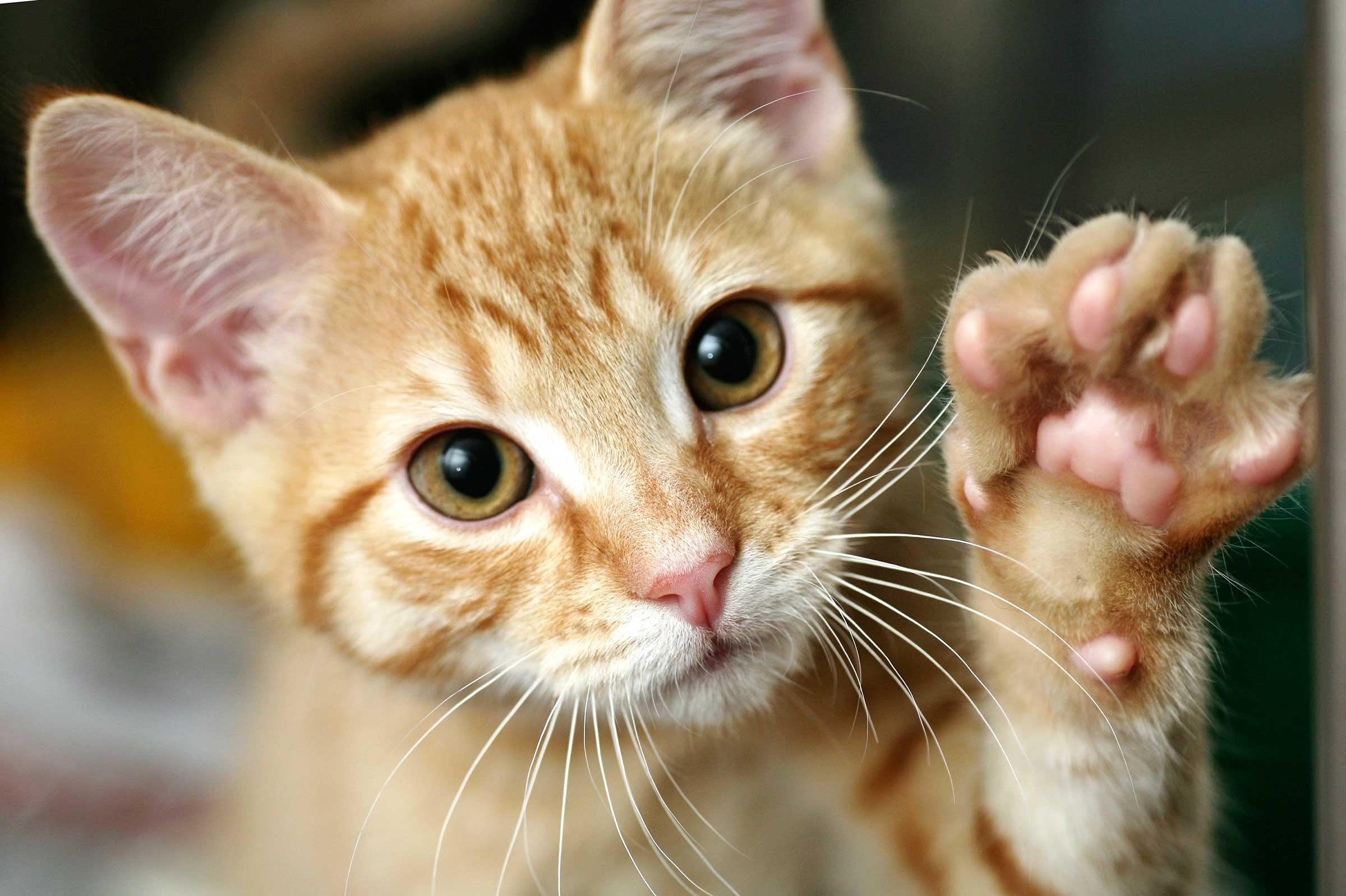 06 train cat shake hands.jpg?resize=1200,630 - 【話題】手術を受ける動物の横で支える猫の看護師!