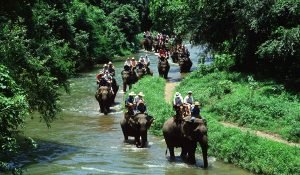 bali-safari-ride04