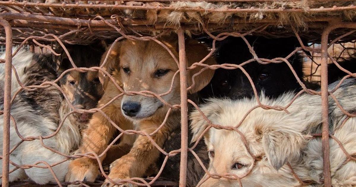 c35e774f3e607a12ef4d.jpg?resize=1200,630 - Taïwan: les personnes qui tuent des chiens et des chats seront désormais punies de prison.