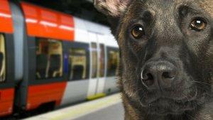 et le meilleur pouvoir est 1 300x169 - Bonne nouvelle: les gros chiens enfin autorisés dans le métro parisien