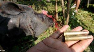 et le meilleur pouvoir est 9 300x169 - Inde: les gardiens d'un parc national ont le droit de TUER les braconniers