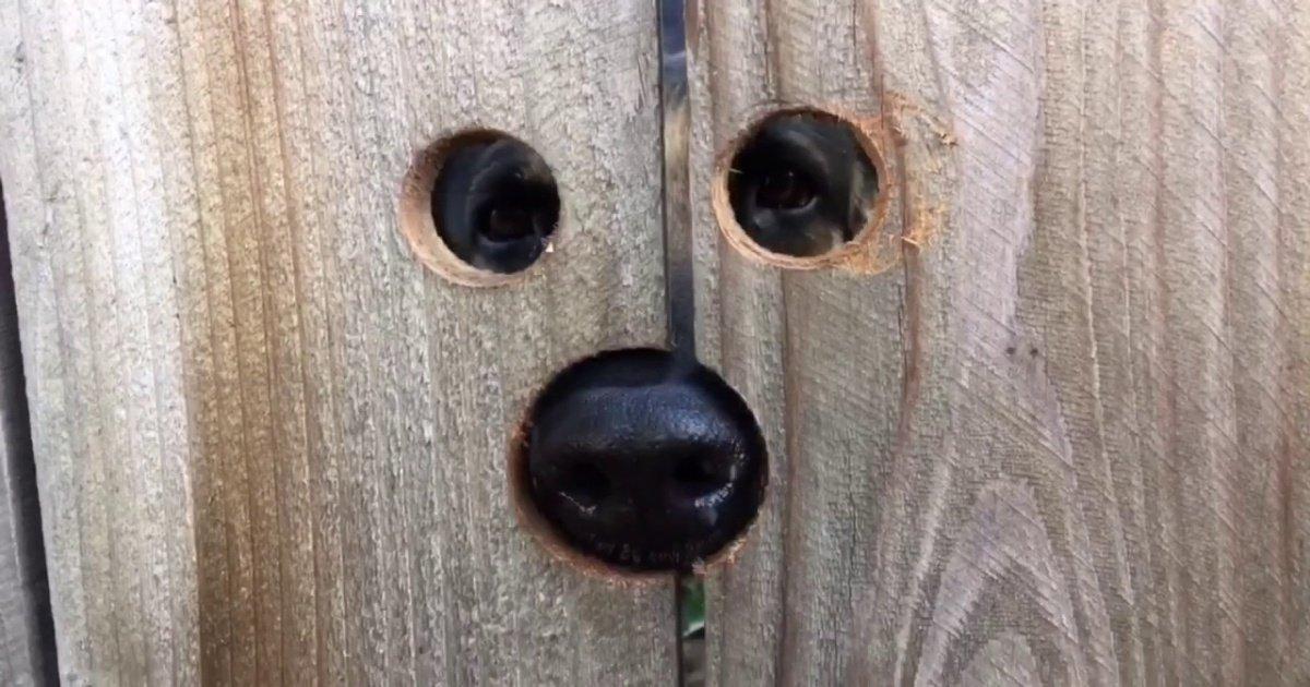 maxresdefault.jpg?resize=1200,630 - Vidéo: cette femme en avait marre de voir la chienne de ses voisins sauter par-dessus sa clôture… découvrez ce qu'elle a fait !