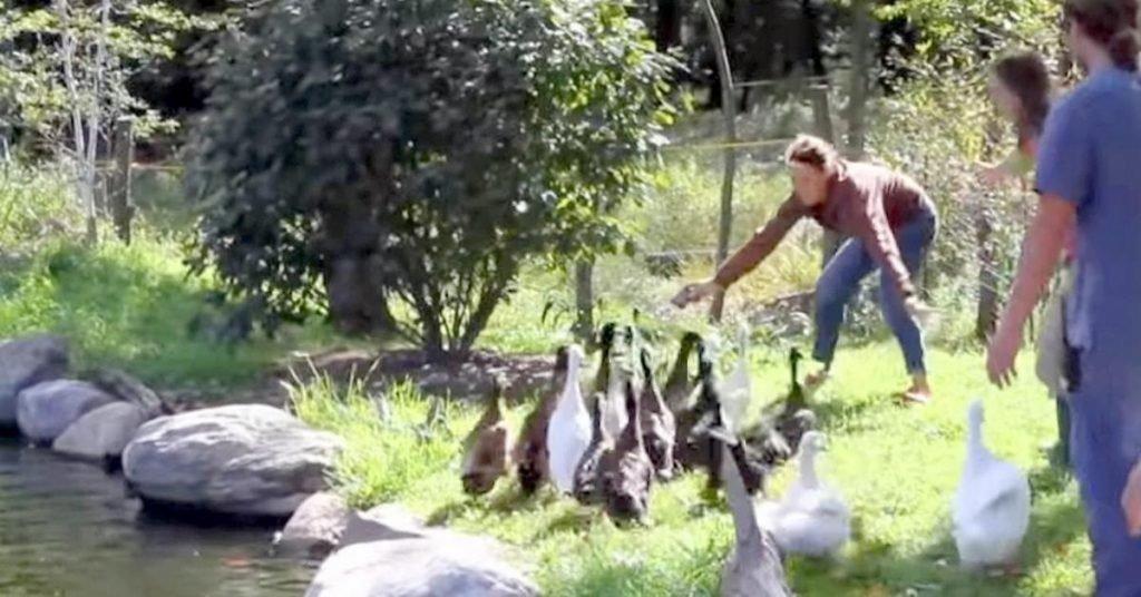 via Youtube, Woodstock Farm Animal Sanctuary