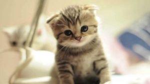 photofacebook 300x169 - Une nouvelle qui va vous faire sourire: la vente d'animaux sur le net a baissé de 30%