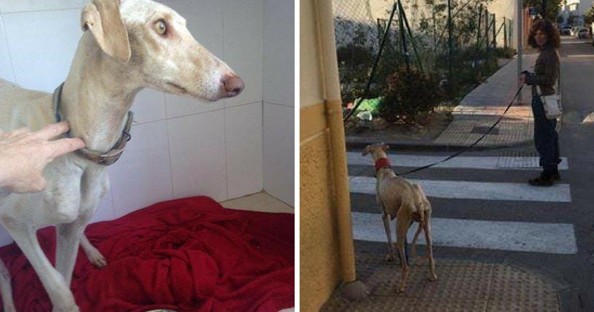 sans titre 10 1.png?resize=1200,630 - Vidéo: Une chienne abandonnée à la patte cassée fait marcher une vétérinaire sur 3 km pour une raison précise