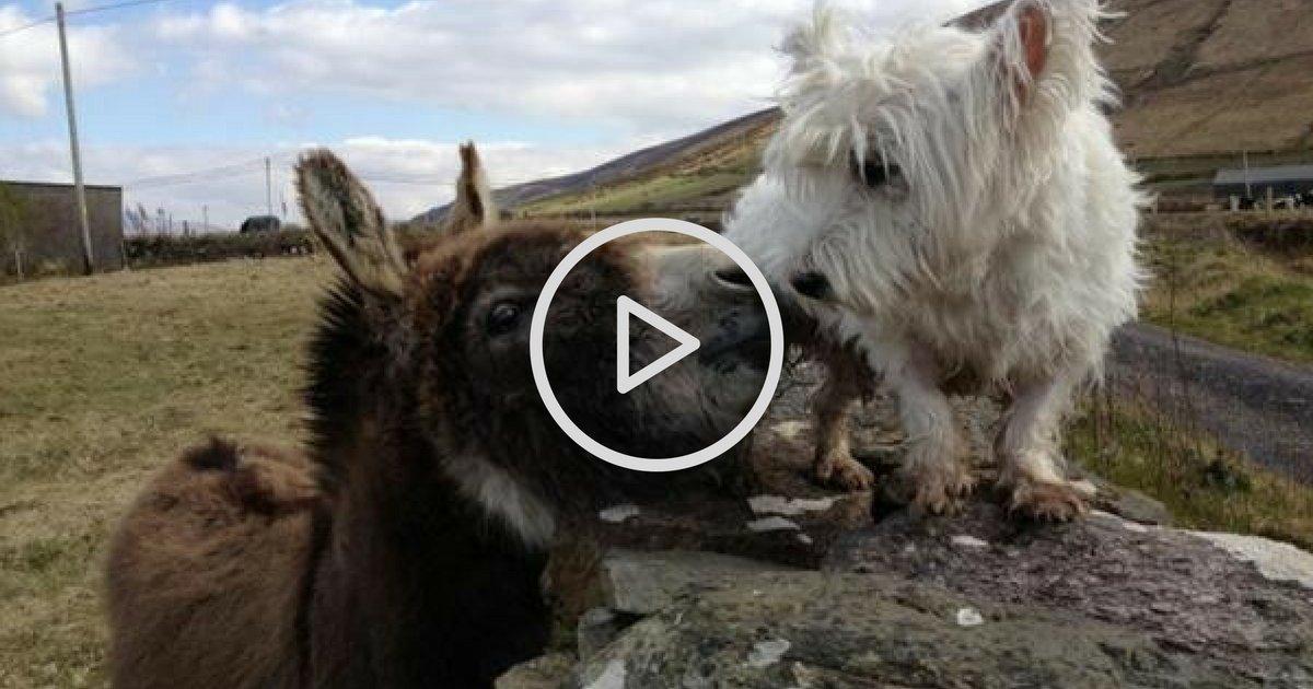sans titre 18.png?resize=1200,630 - Vidéo: Découvrez l'amitié tellement touchante entre Buster le chien et Jack l'âne