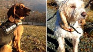 sans titre 5 3 300x169 - Condamné pour acte de cruauté envers des chiens, un homme maltraite à nouveau 12 chiens !