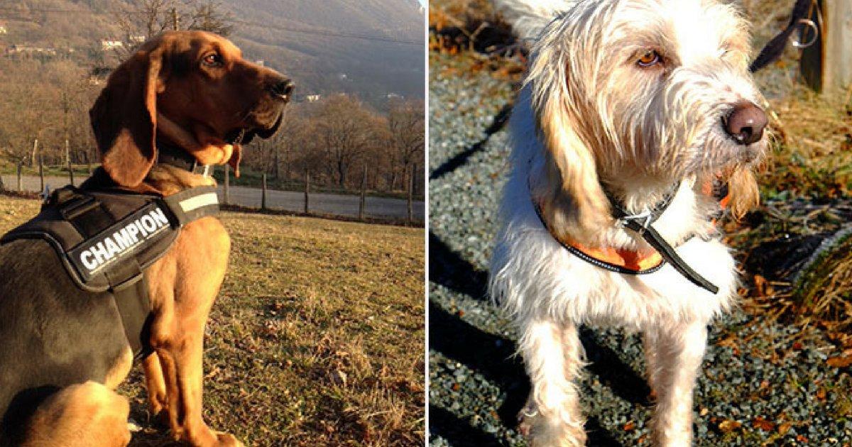 sans titre 5 3.png?resize=1200,630 - Condamné pour acte de cruauté envers des chiens, un homme maltraite à nouveau 12 chiens !