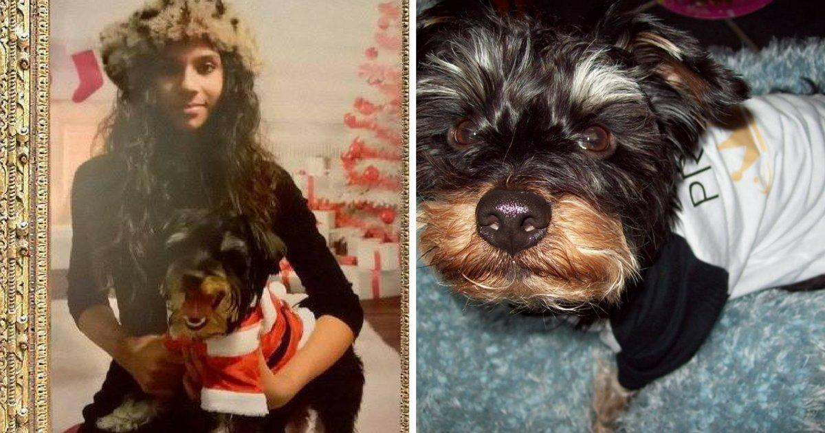 sans titre 6 2.png?resize=1200,630 - Une belle histoire: Elle n'a que 13 ans et sauve un chien de la maltraitance