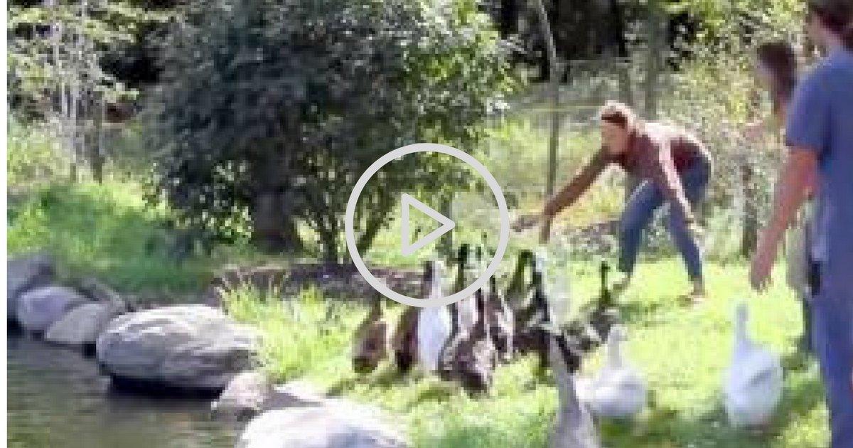sans titre 6 3.png?resize=1200,630 - Ces canards découvrent l'eau pour la première fois de leur vie