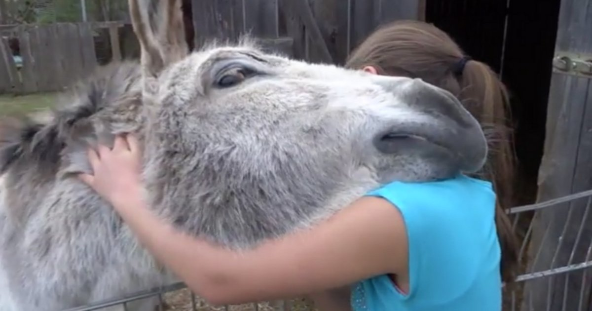 sans titre 9 1.png?resize=1200,630 - Vidéo: L'âne s'élance vers la petite fille et la suite est tellement belle !