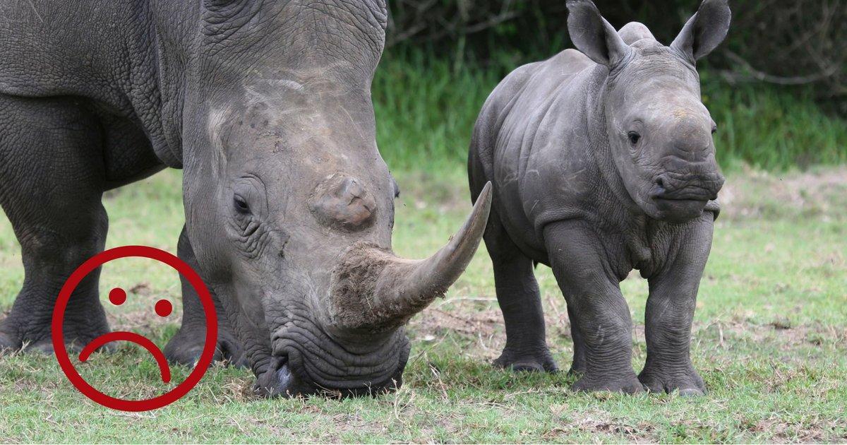 sans titre.png?resize=1200,630 - Afrique du Sud: Le commerce des cornes de rhinocéros est de nouveau légal