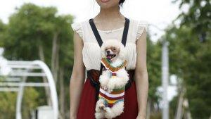 voici la brossea cheveux ultime 2 300x169 - Le sac de transport Ventral pour chat et chien !