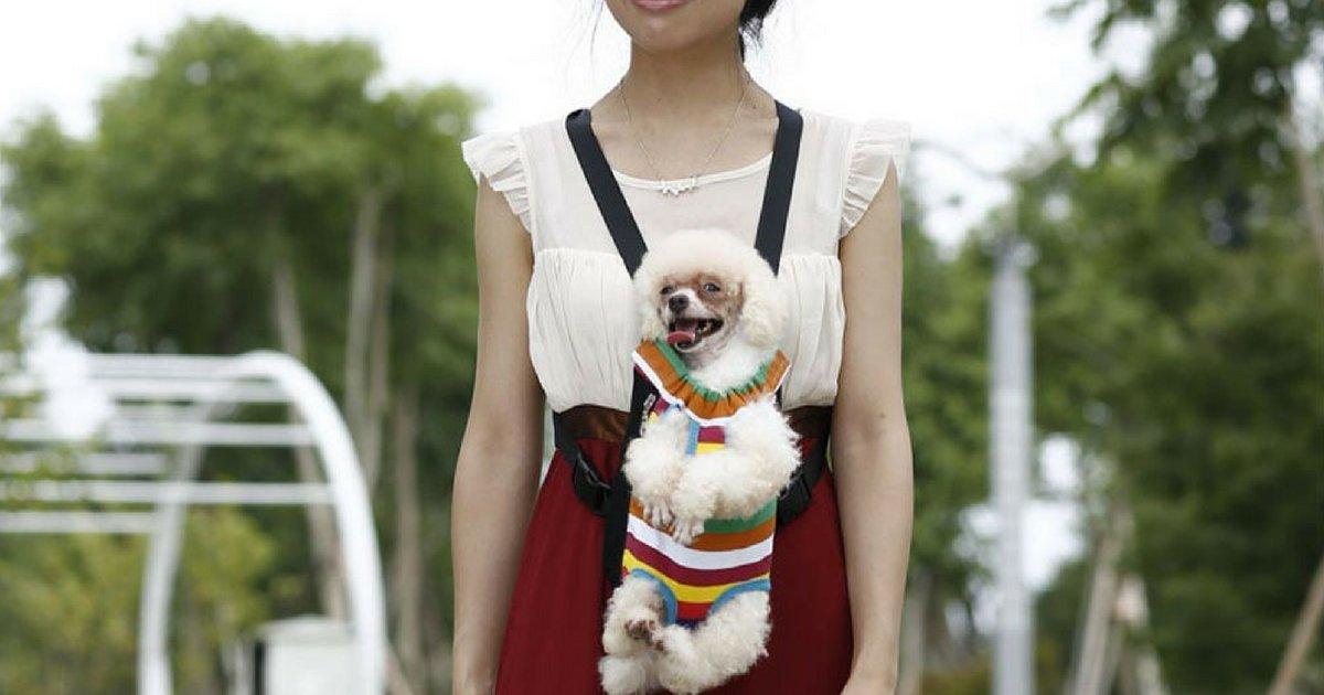 voici la brossea cheveux ultime 2.png?resize=1200,630 - Le sac de transport Ventral pour chat et chien !