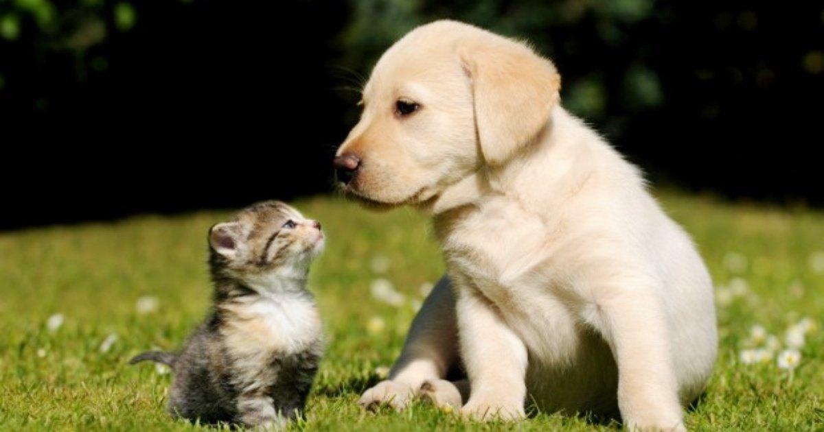 dog and cat.jpg?resize=1200,630 - 7 aliments à éviter pour garder votre chien ou chat en bonne santé