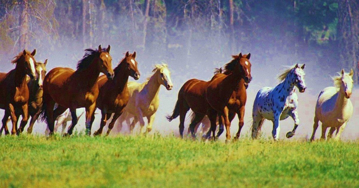 horse5.jpg?resize=1200,630 - Grâce aux internautes, 45 000 chevaux sauvages ont échappé au massacre aux États-Unis