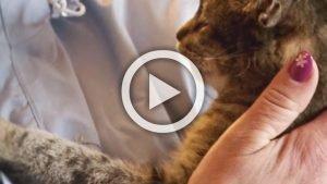 les chats nous aiment   la preuve 300x169 - La preuve que OUI, les chats AIMENT les humains !